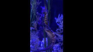 Seahorse ,amazing sea creature