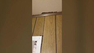 Tease: Termite problems