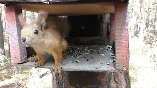 Squirrel in the feeder