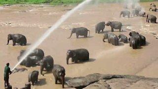 Foreldreløse elefanter får seg en dusj!
