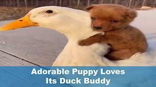 Adorable Puppy Loves Its Buddy