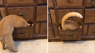 Crafty Cat Opens Drawer Before Climbing Inside For Nap