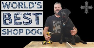 Black Lab Training - World's Best Shop Dog