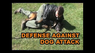 How to defend against dog attacking you