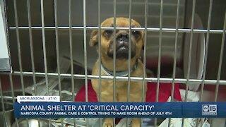 Valley animal shelter at 'critical capacity'