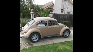 Vintage VW Beetles