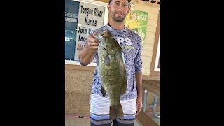 Big Montana Smallmouth Bass