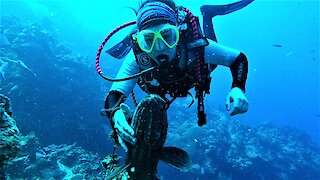 Affectionate grouper fish wants love from his scuba diver friend