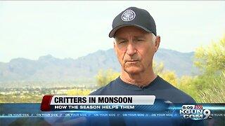 Why Southern Arizona wildlife looks forward to monsoon
