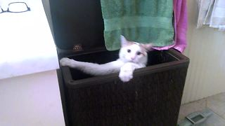 Cat gets Bested by Laundry Basket