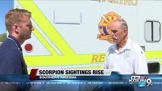 Scorpion sightings rise for pest control companies in Arizona