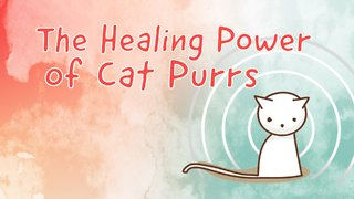 7 Ways Cat Purring Is Good For Human Health