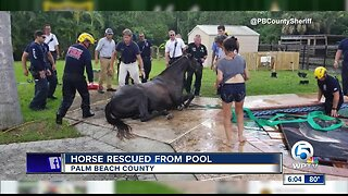 Horse rescued after falling into swimming pool