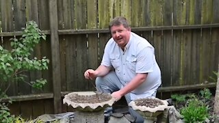 Do this to prevent mosquitoes from hatching in your yard