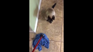 Cat scared by mop