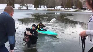 Springfield Township police officer rescues dog from icy pond, reunites him with family