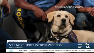 Seeking volunteers for service dogs