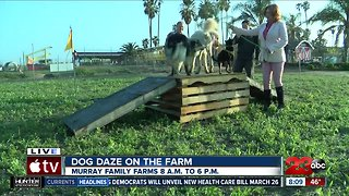 Dog Dazes of fun this weekend at Murray Family Farms