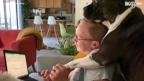 Cão não respeita espaço pessoal de ninguém