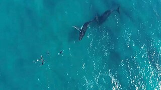 Incredible Moment Divers Get Up-Close-And-Personal With Curious Humpback Whales