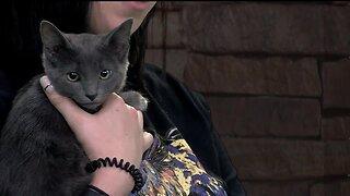 Idaho Humane Society: Mary Kate