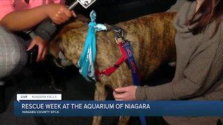 Niagara Aquarium working with Niagara SPCA to find shelter dogs their fur-ever home