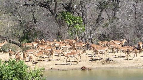 Incredible variety of African wildlife visit waterhole