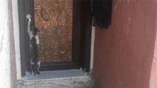 Polite cat knocks on door before entering house