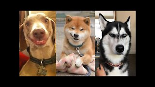 10 MOST UNUSUAL DOGS