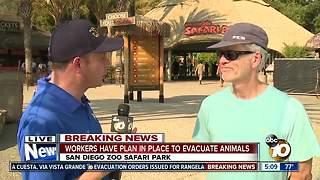 Safari Park guests see Pasqual Fire start