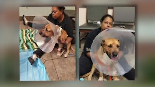 East Cleveland couple says officer 'overreacted' when he shot their family dog