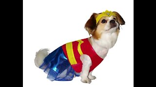 Pet owners say they will dress their animals this Halloween