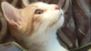 "Cats perform awesome ""presto chango"" magic trick"