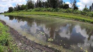 Algae task force to meet in West Palm Beach Wednesday