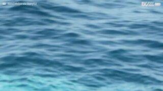 Rara balena albina avvistata in Australia