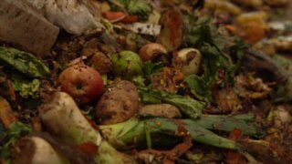 Turning trash into environmental treasure