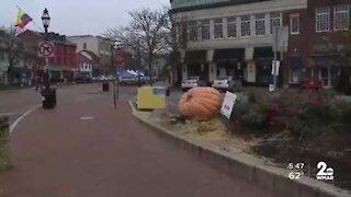 Giant pumpkins invade Annapolis