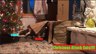 Christmas Cats Attack!