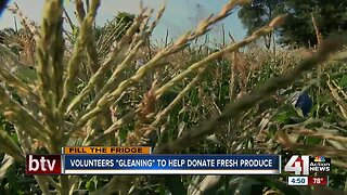 """Volunteers """"gleaning"""" to help donate fresh produce"""