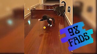 A pet cat tries to catch a ball❤️