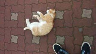 Katten er grådig etter oppmerksomhet!
