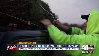 Christmas trees supply remains tight this season