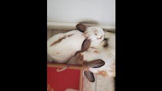 Cute sleeping rabbit!!