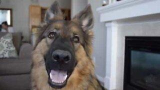 O que podemos aprender com nossos cães?