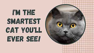 Super smart cat, answers math questions!