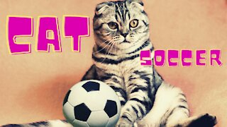 Funny Cat plays Soccer