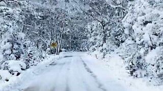 Driving through a snowy mountain in Tasmania