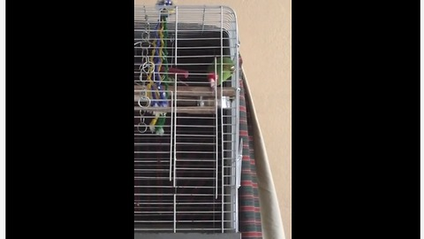 Parrot Loves To Sing And Dance To House Music