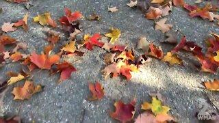 WMAR Fall Staycation: Peak times for Fall Foliage