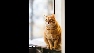 Stray Cat Begging